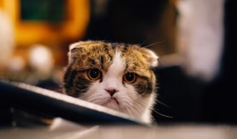 frustrated kitty that looks like it's pouting