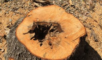 Tree stump with hole inside